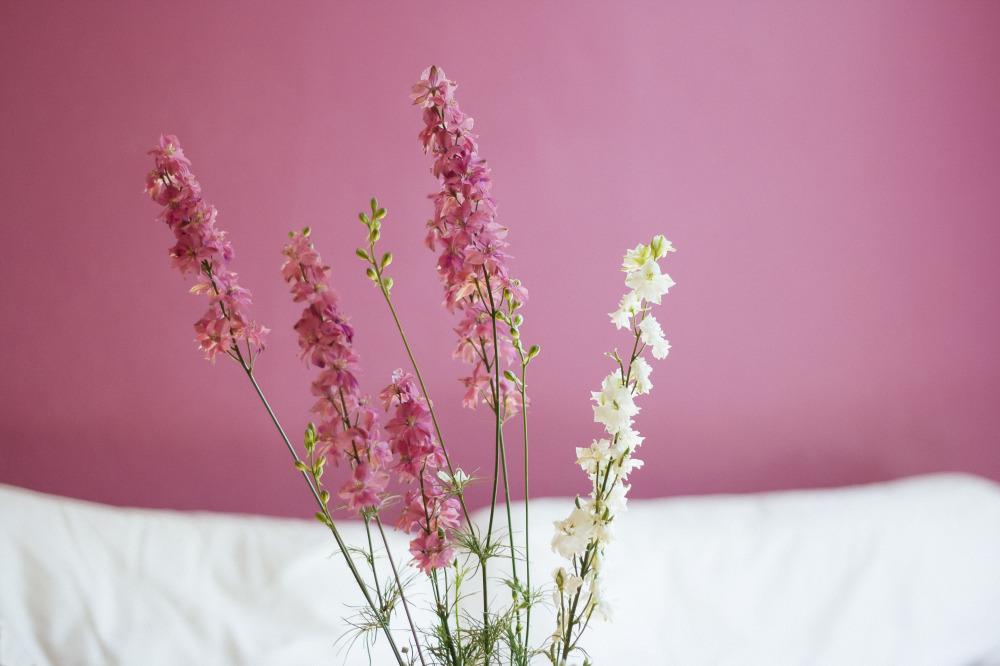 public-domain-images-free-stock-photos-aureliejouan-flowers-1000x666