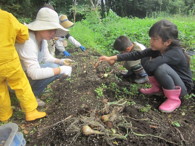 【写真】畑で野菜を掘り起こす子どもと親御さん