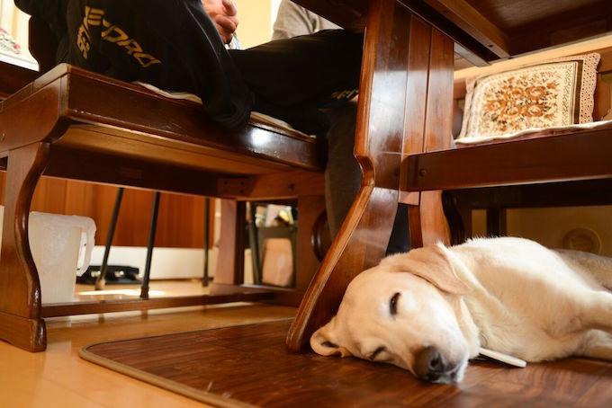 【写真】床に寝そべっているトリトン。