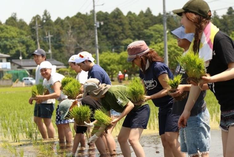 【写真】一列に並んで田植えをする人々。和やかな空気が流れている。