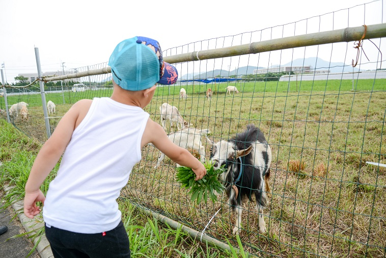 【写真】ヤギの餌をあげる子ども
