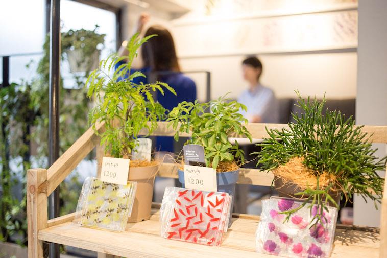 【写真】店内では植物だけでなく、お花が埋め込まれたようなデザインのコースターも販売している