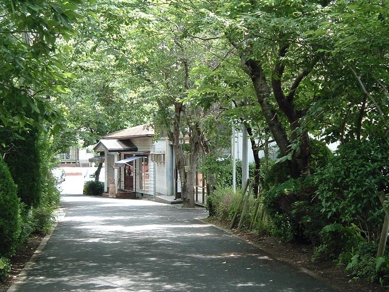 【写真】道の両脇に所狭しと木々が並ぶ。その道の奥では、建物が顔を覗かせている。