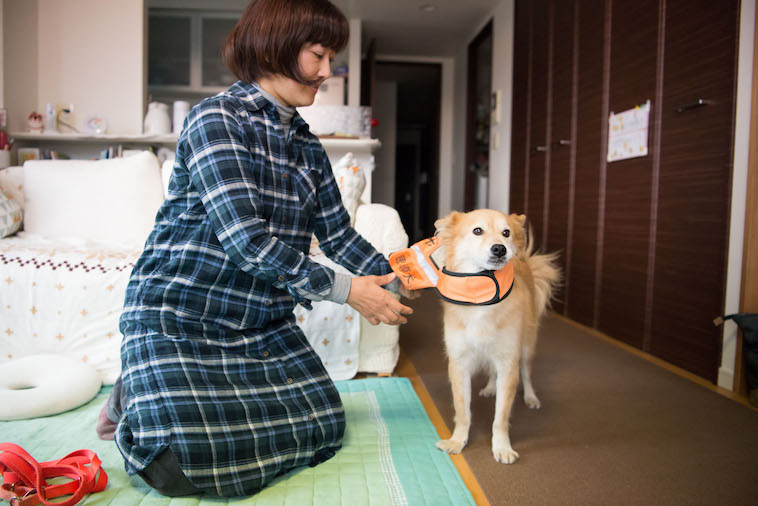 【写真】盲導犬と書かれたケープをあみのすけにつけているあずまさやかさん