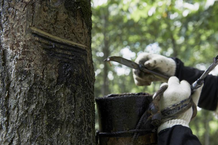 【写真】漆の木の植栽活動