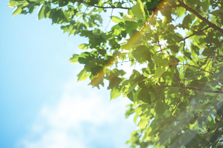 【写真】木々の葉の間から木漏れ日が差し込んでいる
