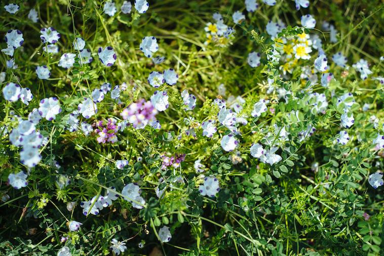 【写真】木漏れ日に照らされる花