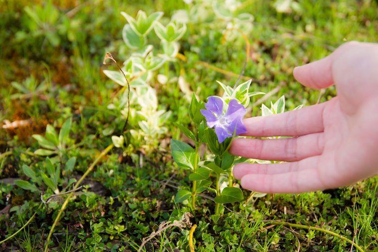 【写真】花を手に取り見つめるうけばさん